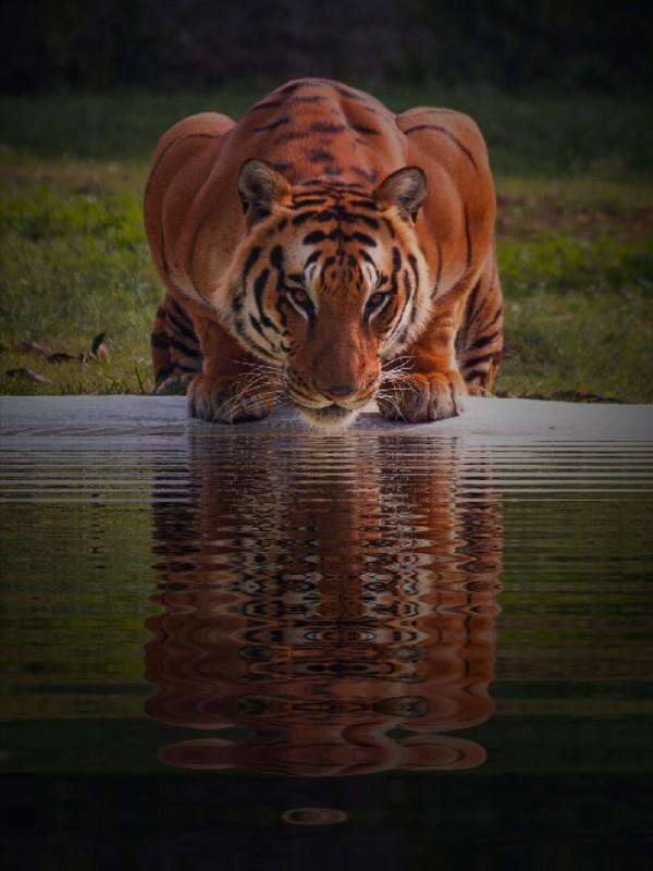 Image3a7330 mirror