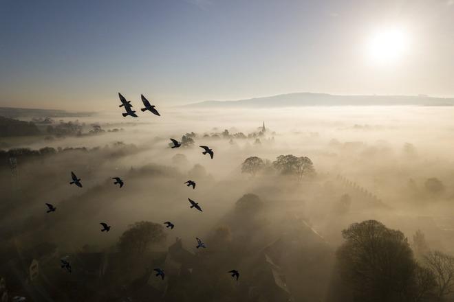 British wildlife photography awards 2